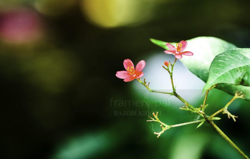 best hd flower, hd image, beautiful flower hd image, best download flower